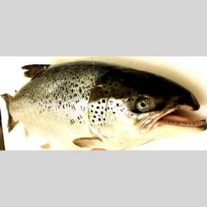 le saumon d'Isigny