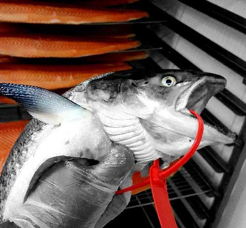 saumon sauvage d'Écosse