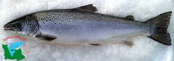 saumon-isigny