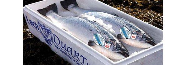 saumon-loch-duart