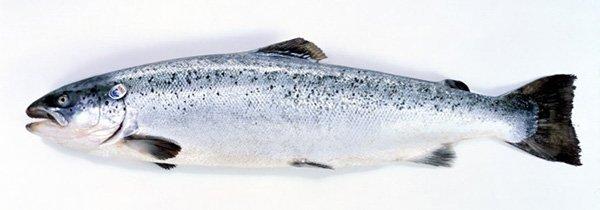saumon-norvege